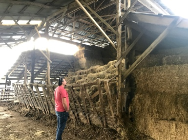 The winter feeding barn at Polyface.